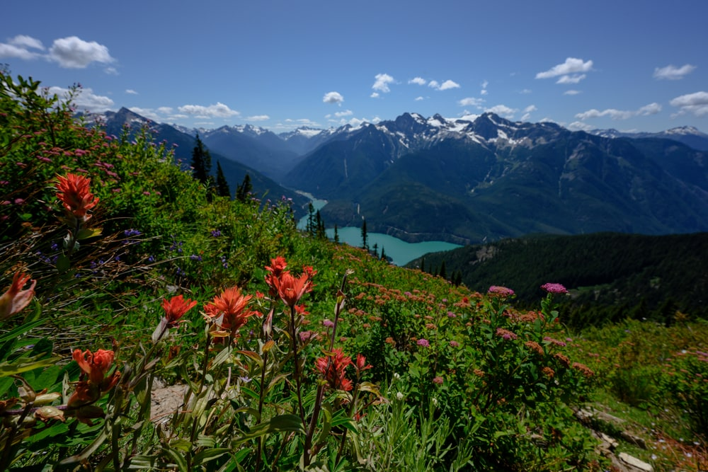Wildflowers Along Mountain Slope Over Diablo Lake in the North Cascades